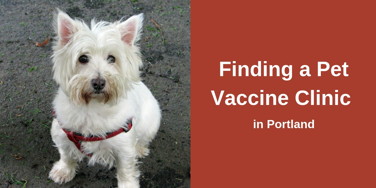 Finding a Pet Vaccine Clinic in Portland