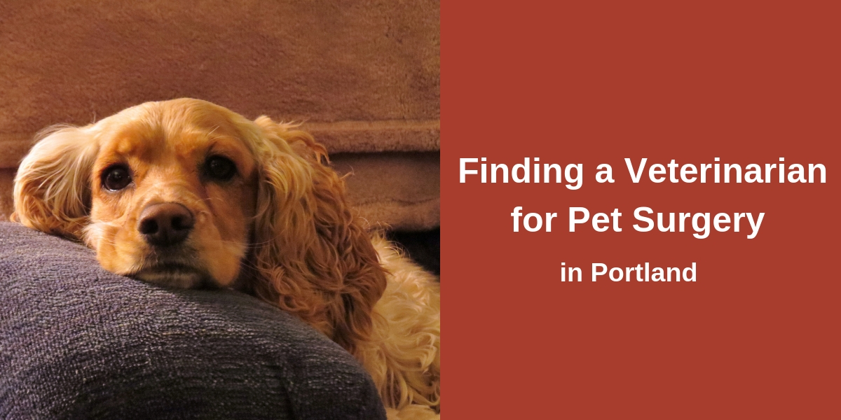 Finding a Veterinarian for Pet Surgery in Portland
