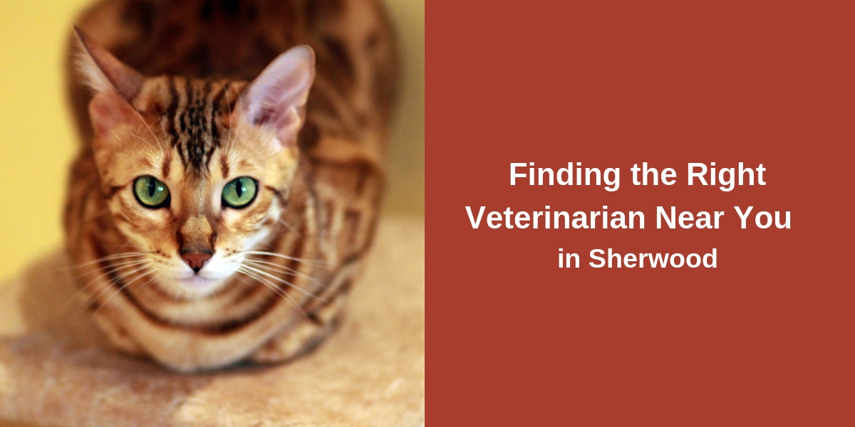Finding the Right Veterinarian Near You in Sherwood