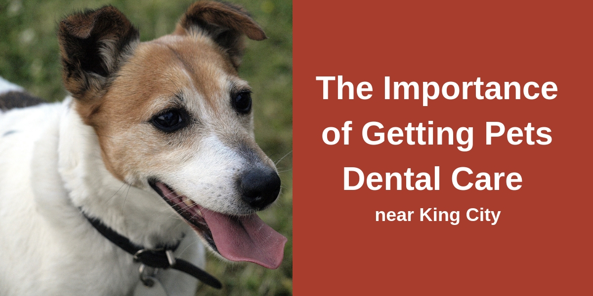 The Importance of Getting Pets Dental Care Near King City