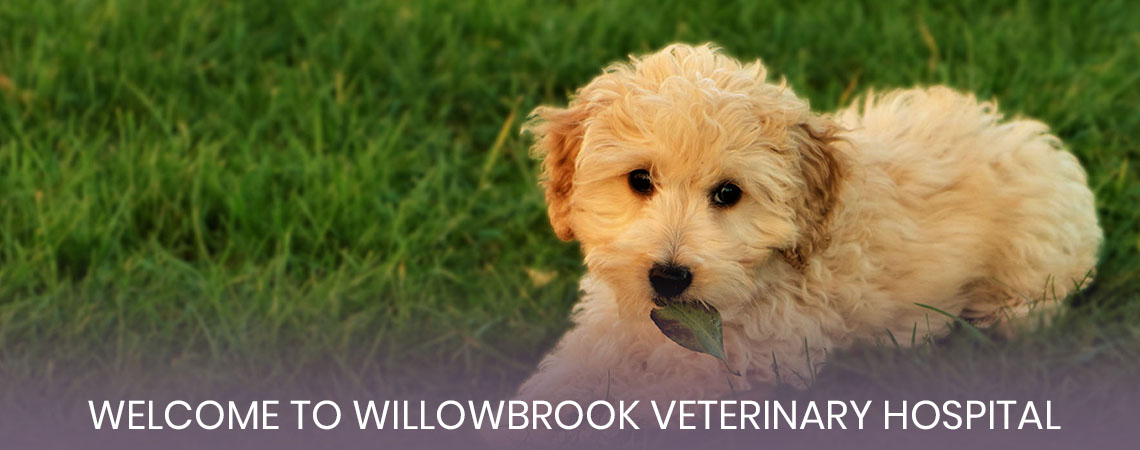 Welcome to Willowbrook Veterinary Hospital